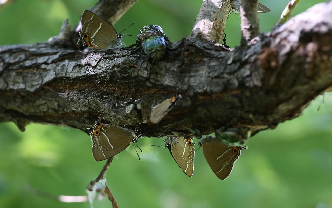 昆虫撮影その3_f0296999_2053781.jpg