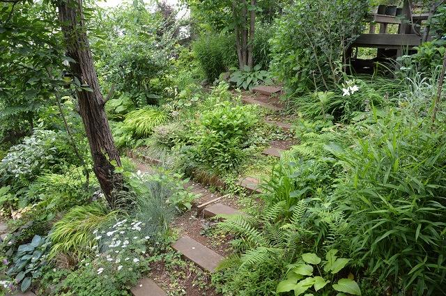 梅雨入りした、6月5日の庭。_c0124100_22391473.jpg