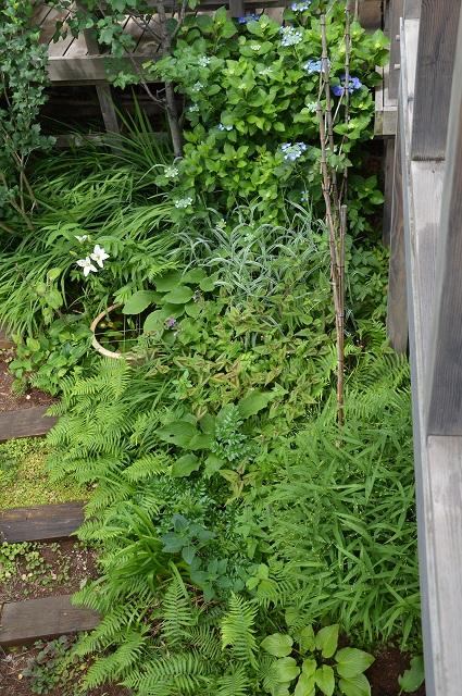 梅雨入りした、6月5日の庭。_c0124100_22392984.jpg