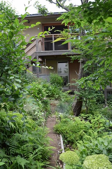 梅雨入りした、6月5日の庭。_c0124100_22393830.jpg