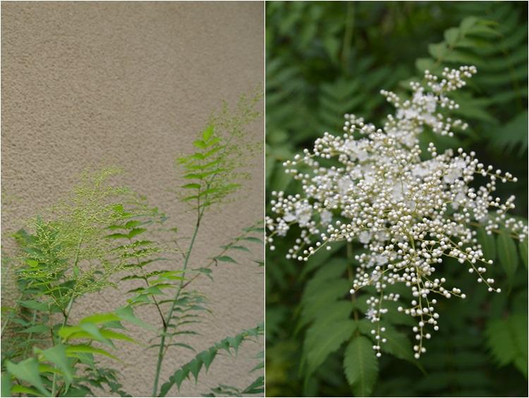 梅雨入りした、6月5日の庭。_c0124100_22403172.jpg