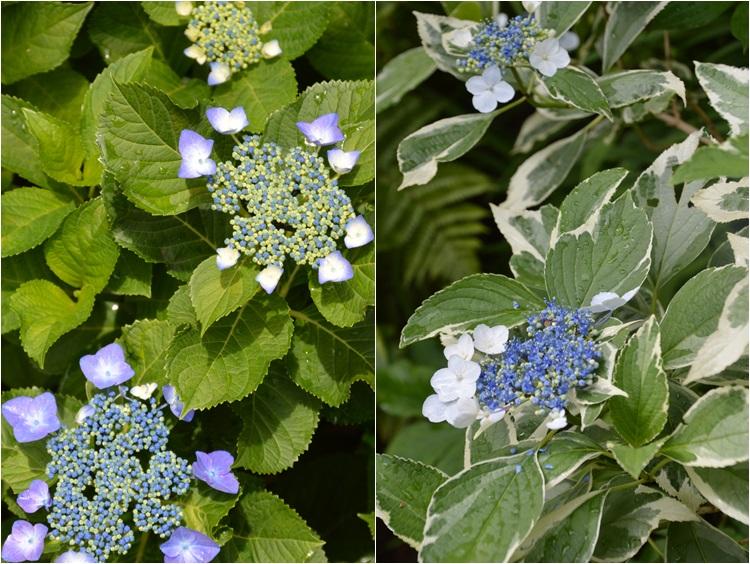 梅雨入りした、6月5日の庭。_c0124100_22404029.jpg