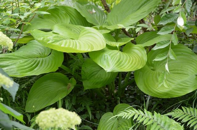 梅雨入りした、6月5日の庭。_c0124100_2241234.jpg