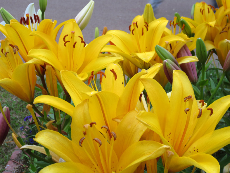 ■紫陽花と筋肉と──週替わりの夕暮れ[6/5]_d0190217_22293816.jpg