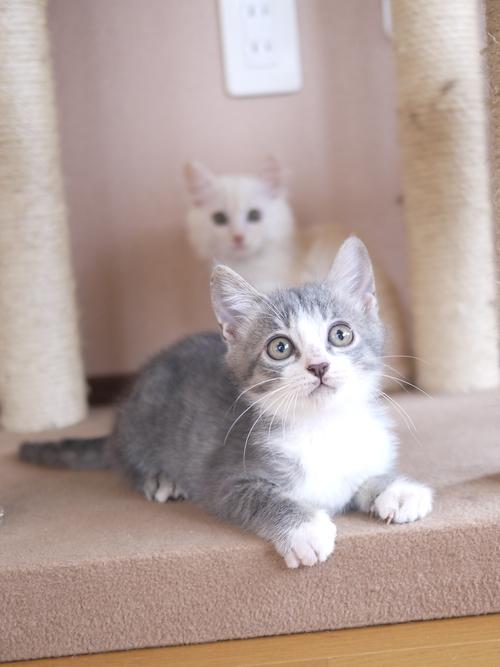 猫のお留守番 がっちゃんくんはーくんくん編。  _a0143140_1757211.jpg