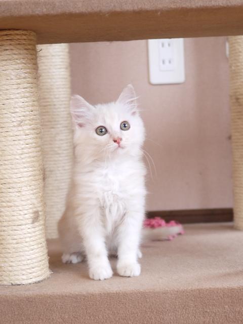 猫のお留守番 がっちゃんくんはーくんくん編。  _a0143140_175884.jpg