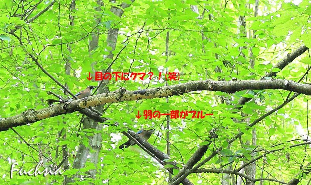 f0127273_22061086.jpg
