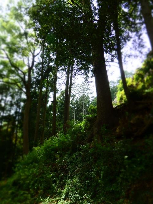 へなちょこ山岳隊_a0180681_18265746.jpg