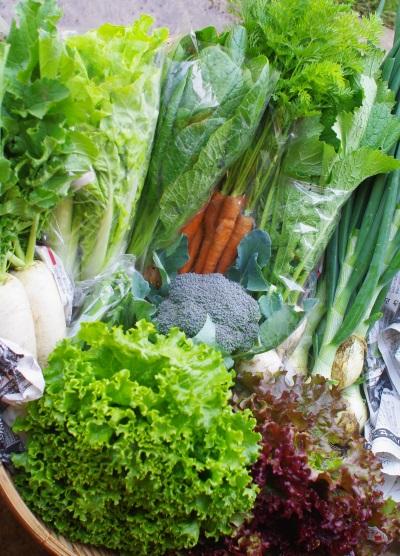 今週の野菜セット(6/7~6/11着)_c0110869_12233896.jpg
