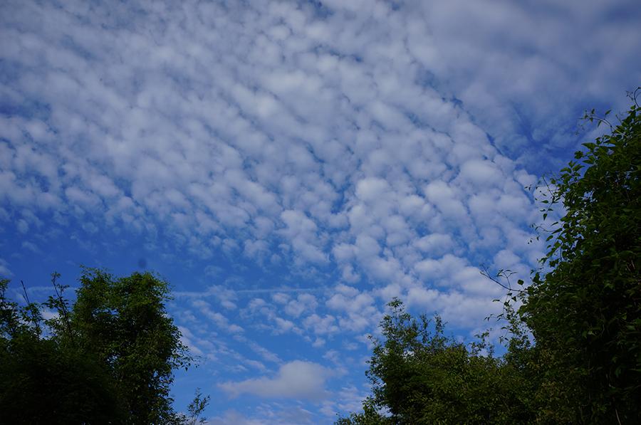 お天気回復♩_f0106597_05271265.jpg