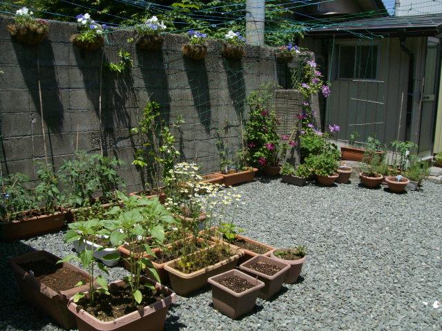 今年の裏庭。お花や野菜で一杯です!_f0055803_15445057.jpg