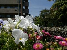 今年の裏庭。お花や野菜で一杯です!_f0055803_15452316.jpg