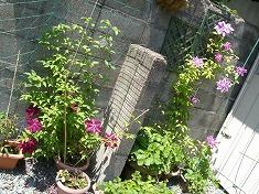 今年の裏庭。お花や野菜で一杯です!_f0055803_15455128.jpg