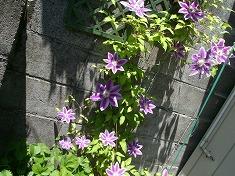 今年の裏庭。お花や野菜で一杯です!_f0055803_15462120.jpg