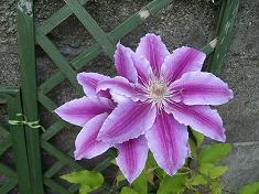 今年の裏庭。お花や野菜で一杯です!_f0055803_15465899.jpg