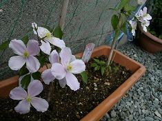 今年の裏庭。お花や野菜で一杯です!_f0055803_1547944.jpg