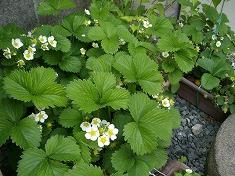 今年の裏庭。お花や野菜で一杯です!_f0055803_15482356.jpg