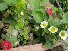 今年の裏庭。お花や野菜で一杯です!_f0055803_1549051.jpg