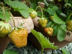 今年の裏庭。お花や野菜で一杯です!_f0055803_15492263.jpg