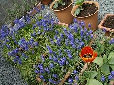 今年の裏庭。お花や野菜で一杯です!_f0055803_15504319.jpg