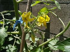 今年の裏庭。お花や野菜で一杯です!_f0055803_1550574.jpg