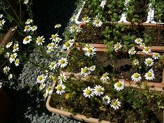 今年の裏庭。お花や野菜で一杯です!_f0055803_15505853.jpg