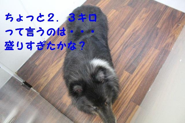 b0130018_8481472.jpg