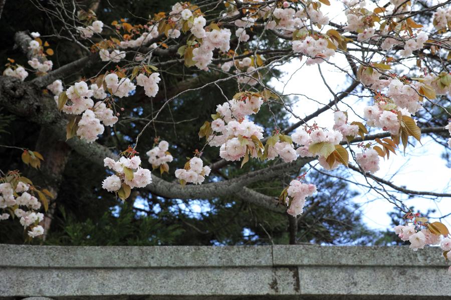 二本松市を歩く⑤~岳温泉神社を歩きながら~_c0223825_23382211.jpg