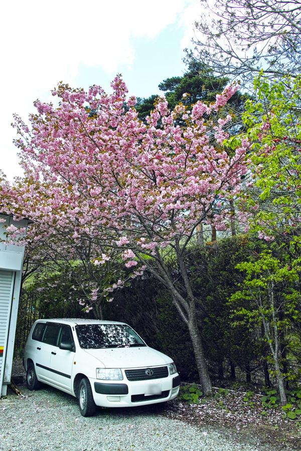 二本松市を歩く⑤~岳温泉神社を歩きながら~_c0223825_23412284.jpg