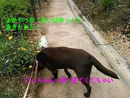 d0013645_11233186.jpg