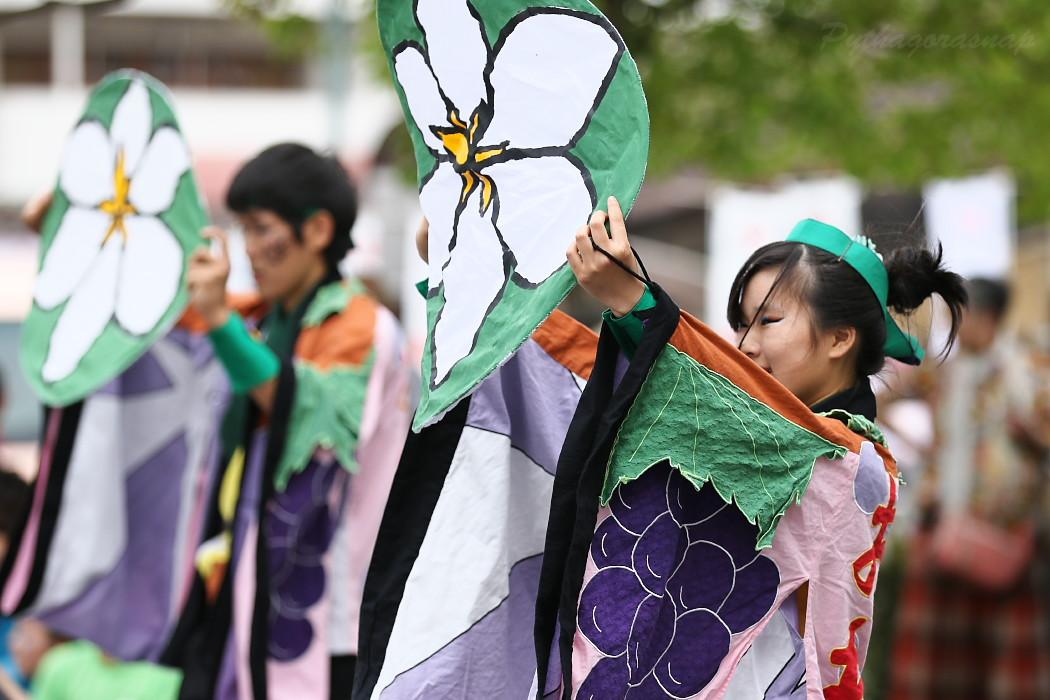 でらおおぶ @ 第13回犬山踊芸祭_c0187584_7493555.jpg