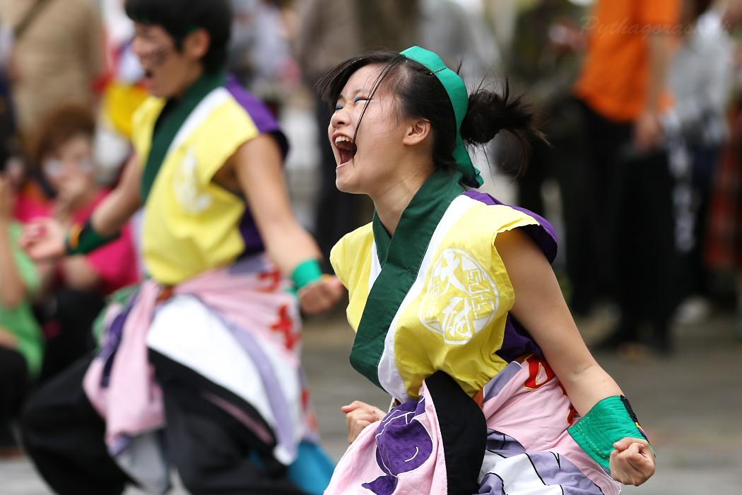 でらおおぶ @ 第13回犬山踊芸祭_c0187584_7503314.jpg