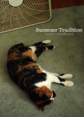 夏の風物詩_b0253205_02551583.jpg