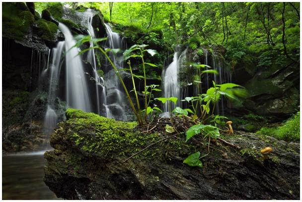猿壺の滝(さるぼのたき)_d0272207_9563290.jpg