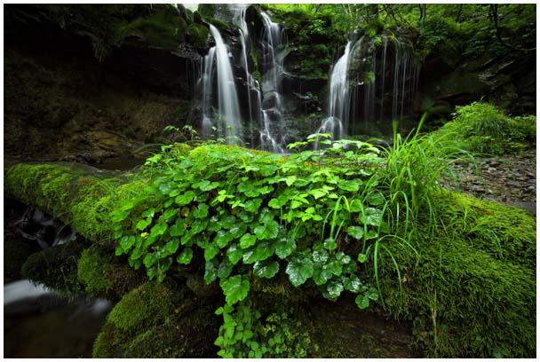 猿壺の滝(さるぼのたき)_d0272207_9563996.jpg