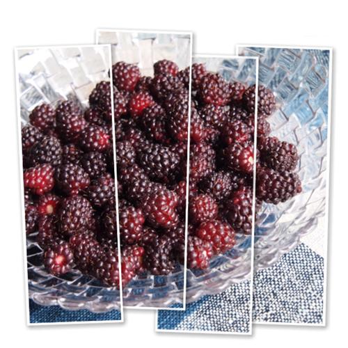 ブラックベリーの収穫_c0026824_1425540.png