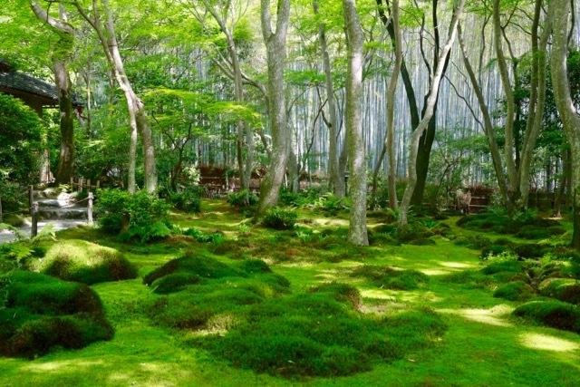 【祇王寺】京都旅行 - 13 -_f0348831_22351346.jpg