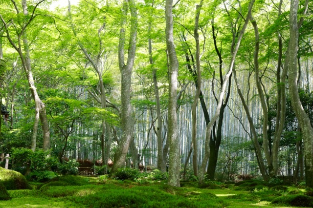 【祇王寺】京都旅行 - 13 -_f0348831_22351371.jpg