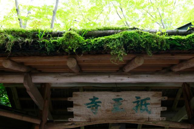 【祇王寺】京都旅行 - 13 -_f0348831_22351399.jpg
