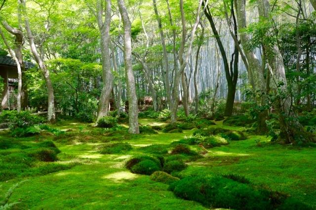 【祇王寺】京都旅行 - 13 -_f0348831_22351406.jpg