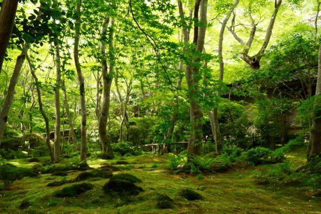 【祇王寺】京都旅行 - 13 -_f0348831_22351468.jpg