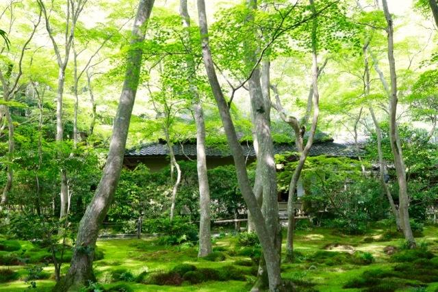 【祇王寺】京都旅行 - 13 -_f0348831_22351480.jpg