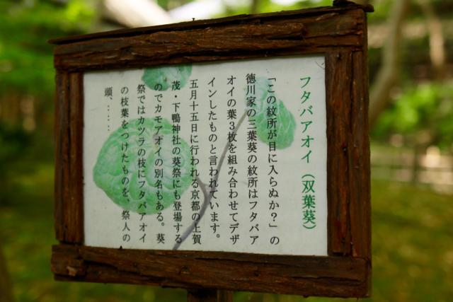 【祇王寺】京都旅行 - 13 -_f0348831_22352872.jpg