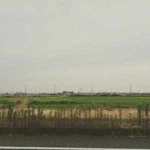 梅雨入り_a0014840_22313539.jpg