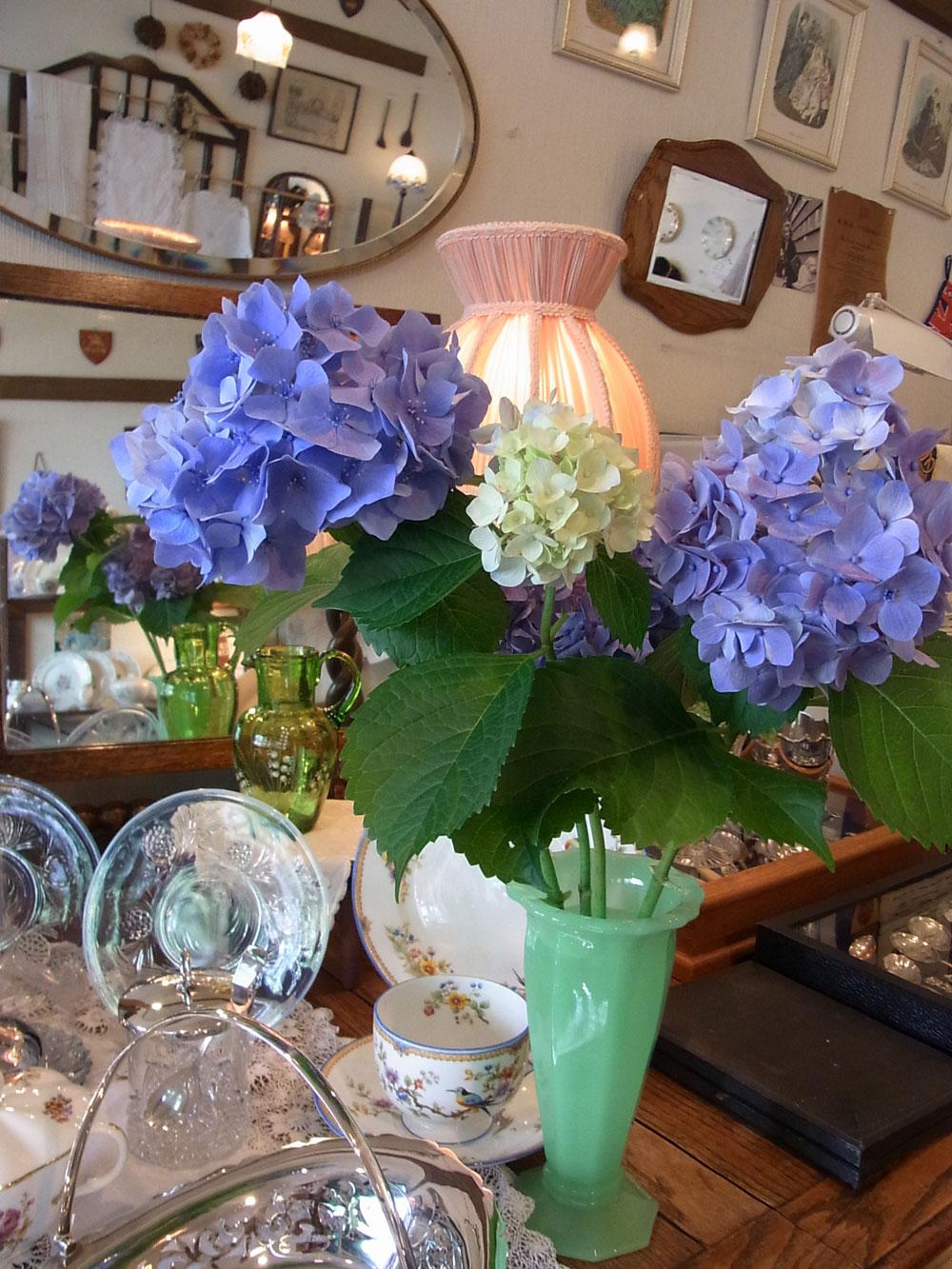 紫陽花....._d0127182_16502044.jpg
