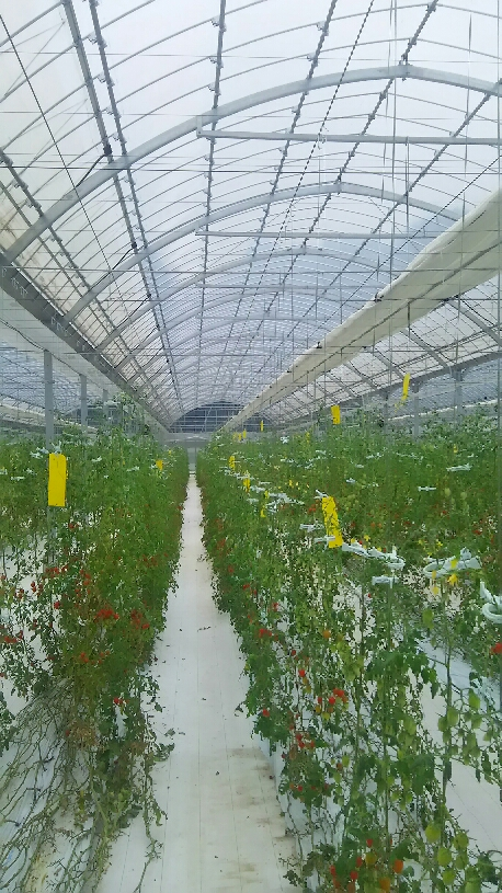 農園訪問_d0154707_13281355.jpg