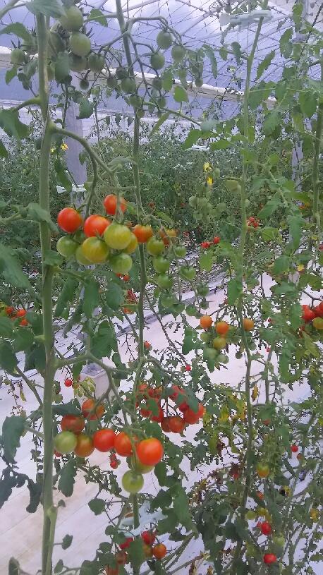 農園訪問_d0154707_13282756.jpg