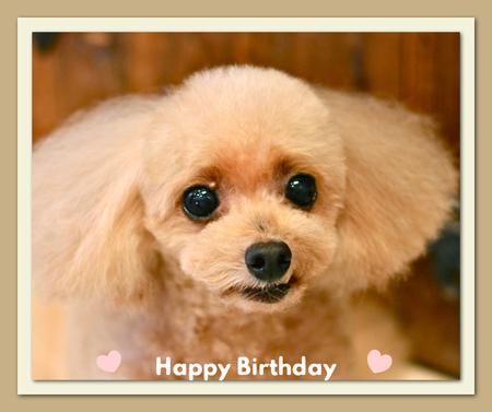 Happy Birthday ポッシュくん♡_d0060413_16444498.jpg