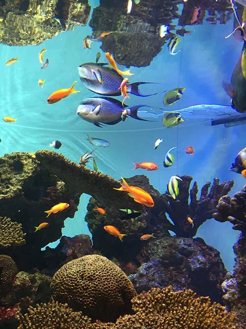 「葛西臨海水族園」を設計した建築家_f0170331_16204259.jpg