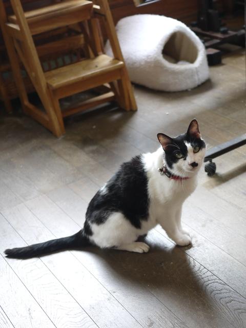 猫のお留守番 ハナちゃんホビちゃんエムくんライオンちゃん編。_a0143140_18562859.jpg